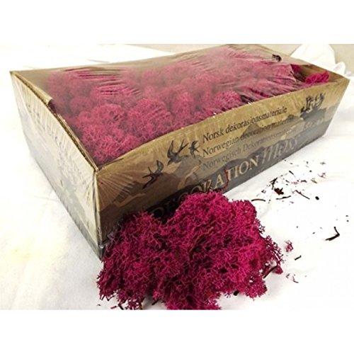 Moss - Norwegian Reindeer - Natural Preserved Dried - 20 Colours - Choose Weight (Hot Pink - Moss, 100 Grams)