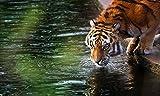 Lsping Puzzle 500 Piezas clementoni Tigre Bebiendo