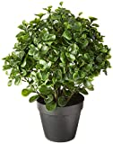 Nearly Natural Peperomia Indoor/Outdoor UV Resistant Plant, 23'