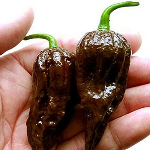 100 graines / paquet chocolat Graines Naga Jolokia Chilli, Ghost Pepper - Bhut Jolokia