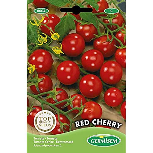 tomate cerise lidl