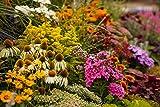 prachtvolle Mischung mittlerer bis hoher Stauden, die im Bauerngarten, Staudengarten, in Kübeln und Trögen einen farbenfrohen Blickfang bieten Blütezeit: von April bis in den Oktober eine Mischung aus verschiedenen farbenprächtigen blühenden mittelho...