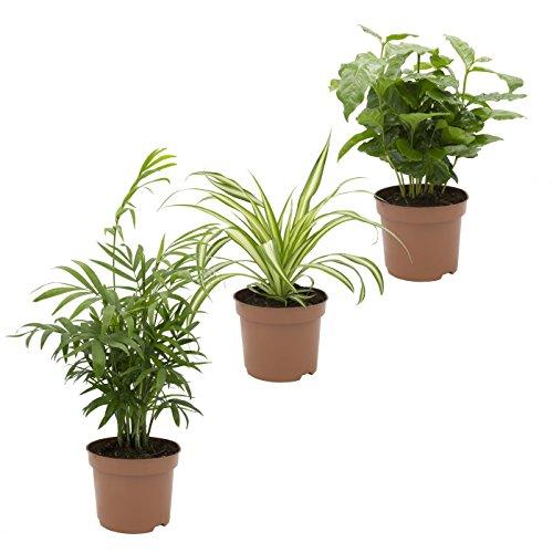 Dominik Blumen und Pflanzen Indoor-Trio Bild