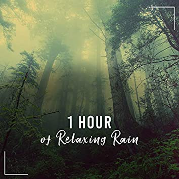 1 Hour Relaxing Rain Tracks to Calm the Mind & Relax