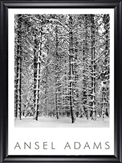 Pine Forest in the Snow Ansel Adams 28x40 Gallery Quality Framed Art Print Landscape B&W Photography