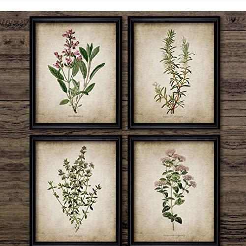 LLXHG Vintage kruid kunst canvas poster en prints Oregano rozemarijn salie tijm canvas schilderij retro muurschilderijen huis kunst muur decoratie 30 x 40 cm x 4 geen lijst