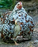 2021 Weekly and Monthly Planner: Chicken with Chick - Monthly Calendar with U.S./UK/ Canadian/Christian/Jewish/Muslim Holidays– Calendar in ... Nature Animals For Work Business School
