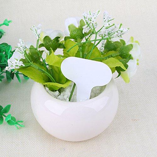 YosooXX 100 Etiquetas de plástico Impermeables para Plantas de 2,6'''1,9''1'' Tipo T para guardería o jardín.