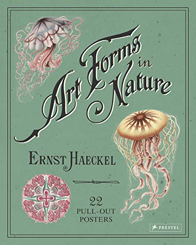 Art Forms in Nature: 22 Pull-Out Posters