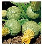 inception pro infinite 70 c.ca semi zucchino tondo di nizza - cucurbita pepo - in confezione originale - prodotto in italia - zucchine - zi015