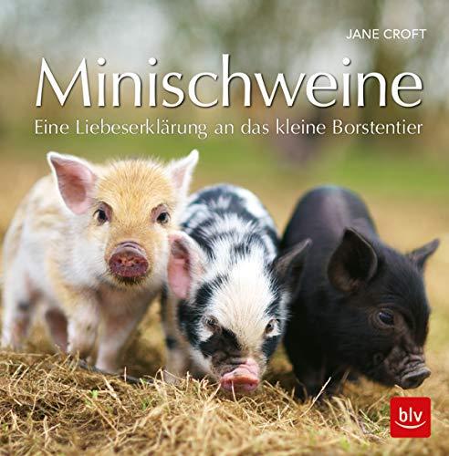 Minischweine: Eine Liebeserklärung an das kleine Borstentier