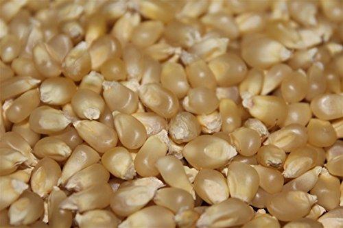 Buy Bargain Popcorn Seed - Pennsylvania Dutch Butter Popcorn – 500 Fresh Seed – BL02