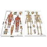 Pack 2 Láminas de Huesos y Músculos