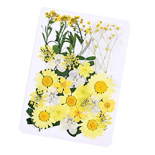 Daimay 33 PCS Fleurs séchées Naturelles Mixed Multiple Real Pressed Flowers Assortiment coloré pour la résine de Bricolage Bijoux Nail Art Décors Floraux - Style F