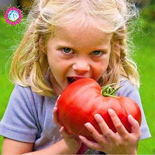 11,11 Nouveaux graines de tomates rares + HEIRLOOM Semences Potagères - « géant Beefmaster hybride tomate » non-OGM et DÉLICIEUX !!