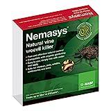 Nemasys vine weevil killer standard pack