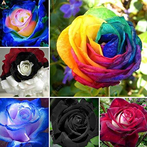 Generic Fresh 200 Stück Rosenblumensamen zum Pflanzen gemischt 7