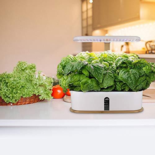 ZDYLM-Y Indoor Herb Garden Kit, Hydroponische Anzuchtsysteme mit automatischem Timer und höhenverstellbar für Verschiedene Pflanzen