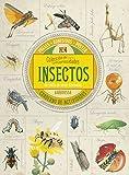 Colección de curiosidades. Insectos...