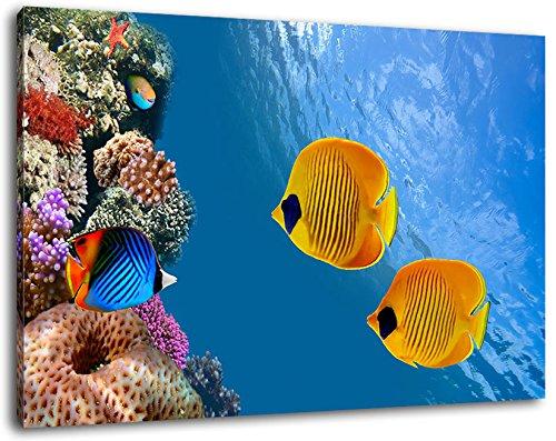Aquarium desktop op canvas, XXL enorme afbeeldingen compleet ingelijst met legplank, fotolijst