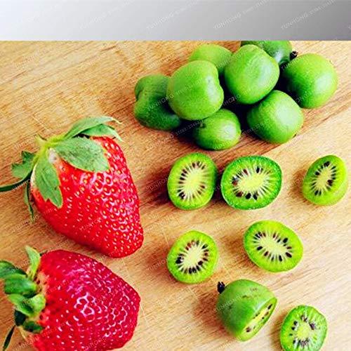 Frais Kiwi Graines 100% Réel Actinidia Chinensis Graines Délicieux Bio Haute Valeur Nutritionnelle Bonsaï Maison Jardin Plante 100 Pcs