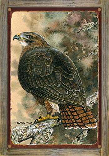 Northwest Art Mall Red Tailed Hawk Rustic Metal Print on Reclaimed Barn Wood from Original Watercolor Painting by Artist Dave Bartholet 12' x 18'