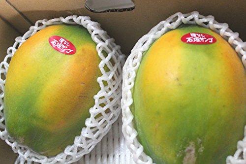 沖縄県産フルーツパパイヤ 2kg(2〜5個)