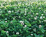 Perennial, Nitro-Coated, Inoculated Clover Seed Helps boost soil nitrogen levels, taking nitrogen from the air and fix it in the soil Can be used as ground cover, cover crop and for erosion control Useful in pasture mixes and turf mixes USDA Zones: 3...
