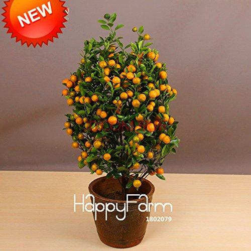 Best-vente! 100pcs / Arbres sac Balcon Patio pot fruits Plantés Graines Kumquat Graines d'Orange Seeds Tangerine Citrus, # 8B9JQ4