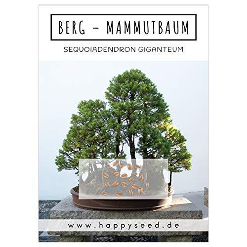 Außergewöhnliche Bonsai Samen mit hoher Keimrate - Pflanzen Samen Set für deinen eigenen Bonsai Baum (1x Berg Mammutbaum)
