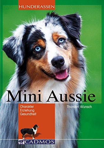 Mini Aussie: Charakter, Erziehung, Gesundheit (Hunderassen)