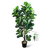 Aveyas 6ft Artificial Fiddle Leaf...