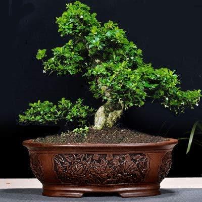 HONIC Retro Lila Sand Bonsai Blumentopf Große Indoor BalconySimple Garten Keramik Bosai Pot Emboss ZiSha Bosai: 01, Extra große