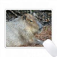 カピバラ動物の側面図 PC Mouse Pad パソコン マウスパッド