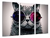 Cuadro Fotográfico Gato Lennon, Gafas Vintage Tamaño total: 97 x 62 cm XXL