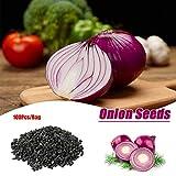 Graines Noires Oignon 100 Pcs/Sac Graines d'oignon Violet Graines de légumes biologiques pour la Maison Jardin Plantation Allium