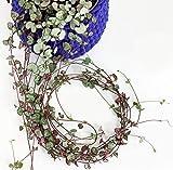 Isenzo Ceropegia Woodii Leuchterblume HÄNGENDE Herzen Zimmerpflanze Geschenkidee P11
