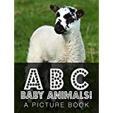 ABC Baby Animals! A Picture Book (English Edition)
