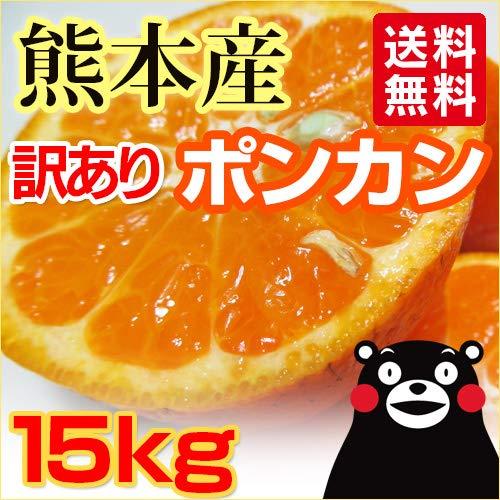 熊本産 訳あり ポンカン 15kg 【 九州 熊本 ミカン ぽんかん 柑橘 デコポン 】