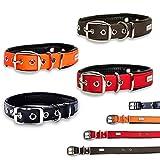 PetTec Hundehalsband aus Trioflex mit Polsterung, Wetterfest, Wasserabweisend, Robust (Rot, Braun, Schwarz, Orange)