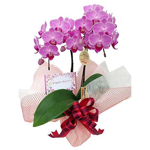 ミニ胡蝶蘭 ギフト お誕生日セット4号鉢 2本立 お花 プレゼント お祝い 生花 鉢植え 開店祝い 父の日 敬老の日 おじいちゃん おばあちゃん 贈り物