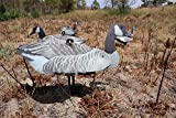 FUD Fold Up Lesser Canada Goose Decoy - 6 Foldable, Collapsible Full Size Canadian Goose Decoys for Land and Water use. Pack of six, Easy to Carry, Durable,Space Saving Waterfowl Hunting Decoy…