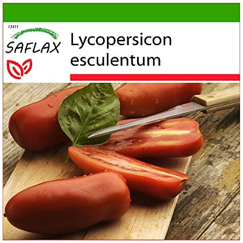 SAFLAX - Tomate -San Marzano - 10 semillas - Con sustrato estéril para cultivo - Lycopersicon esculentum