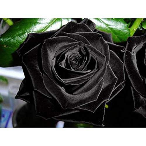 Rompecabezas para adultos / adolescentes / niños (1000 piezas) Black rose 1000Pcs Rompecabezas para adultos adolescentes Rompecabezas Divertido juego de rompecabezas grande, Rompecabezas de desafío R