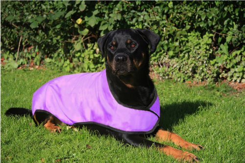 Prestige - Manteau rafraichissant pour chien - Violet - Taille L