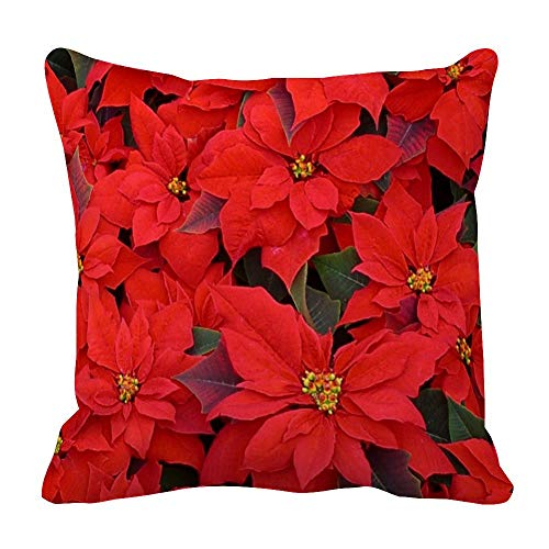 perfecone Home Improvement Cotton Pillowcase Double Red Poinsettias I Holiday Floral Sofa and car Pillow case 1 Pack 13.8 x 13.8 inches/35 cm x 35 cm