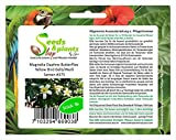 8x Magnolia Daphne Papillons Jaune Oiseau Jaune/Blanc Graines Fleur #375