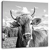 Pixxprint Neugierige Kuh auf Weide im Allgäu, Monochrome