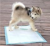 Animus 10 Tappetini Igienici per Cani, Training Pad Addestramento Cane, Traversine Pannolini Super Assorbenti 60 cm x 45 cm Altissima qualità