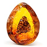 Queenbox Resin Amber Butterfly Insect Stone Beautiful Pendant Hand Made Necklace